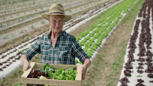 tu portrait of a female farmer picking up a full vegetable crate - mid adult women stock videos & royalty-free footage