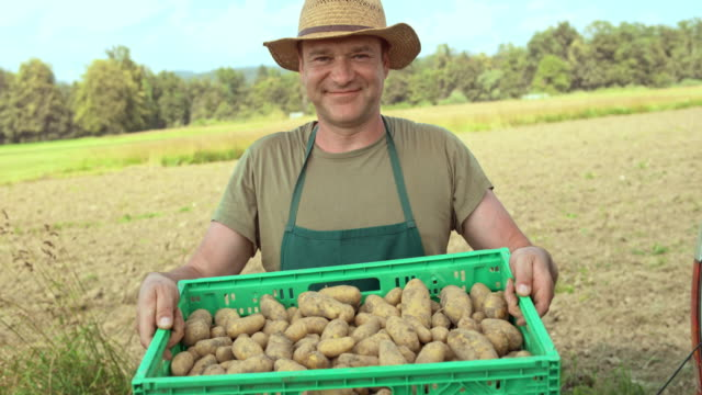 vídeos de stock e filmes b-roll de portrait of a happy farmer taking potatoes out of the delivery truck - agricultura