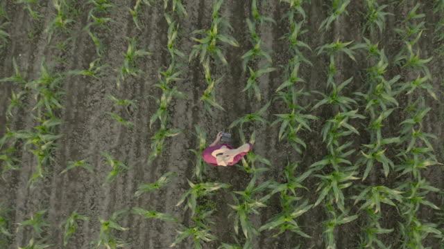 男性農家の空中肖像画は、フィールドで彼の帽子を脱ぐ - 農作業点の映像素材/bロール
