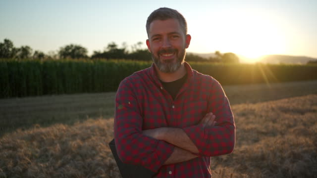 portrait of a mid-aged modern farmer standing with arms crossed in the wheat field at sunset - standing stock videos & royalty-free footage