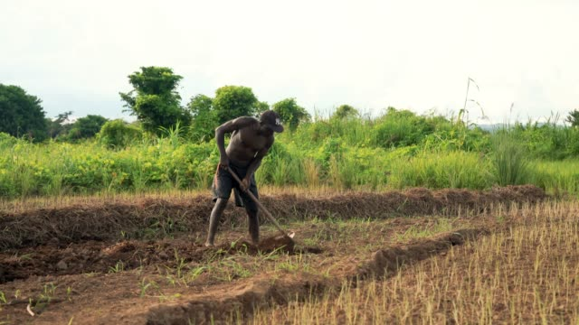 portrait of african rural farmer in malawi - africa stock videos & royalty-free footage