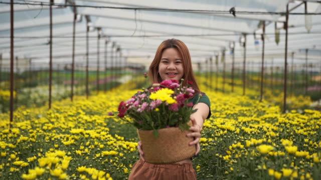 portrait of asian teenage girl in chrysanthemums flower farm , showing flower basket - one teenage boy only stock videos & royalty-free footage