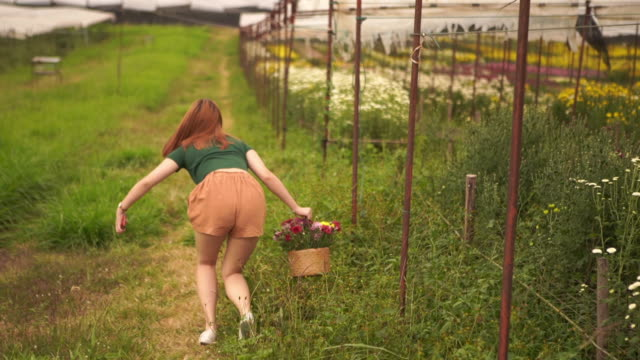 portrait of asian teenage girl walking in chrysanthemums flower farm and holding flower basket , accident , stumble - one teenage boy only stock videos & royalty-free footage