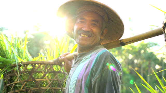 portrait of bali man collecting rice in baskets - east stock videos & royalty-free footage
