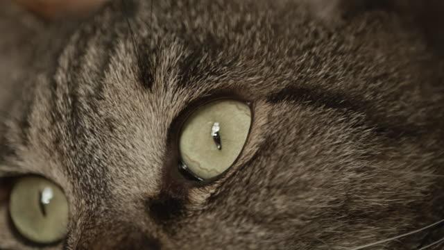 portrait of cat sitting on sofa at home - 動物の眼点の映像素材/bロール