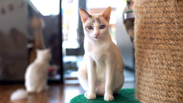ポートレートの猫 - 雑種のネコ点の映像素材/bロール