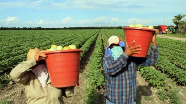 vídeos y material grabado en eventos de stock de ws ms portrait of couple carrying buckets with vegetables on field / homestead, florida, usa - inmigrante