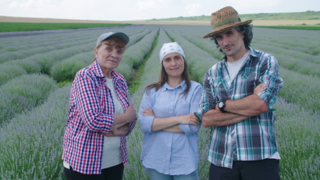 portrait of farmer's family examining the new harvest of the blooming lavender plantation. agricultural occupation. bulgarian lavender fields. - agricultural occupation stock videos & royalty-free footage