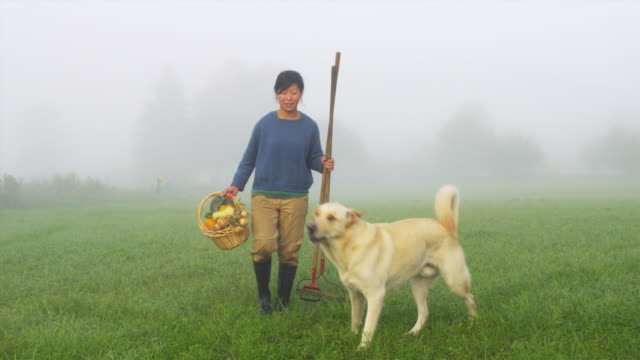 WS Portrait of female organic farmer in field with wicker basket full of vegetables and rake, dog walking on grass, Manchester, Vermont, USA