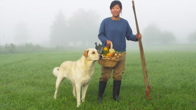WS Portrait of female organic farmer standing in field with wicker basket full of vegetables and rake, dog walking on grass, Manchester, Vermont, USA