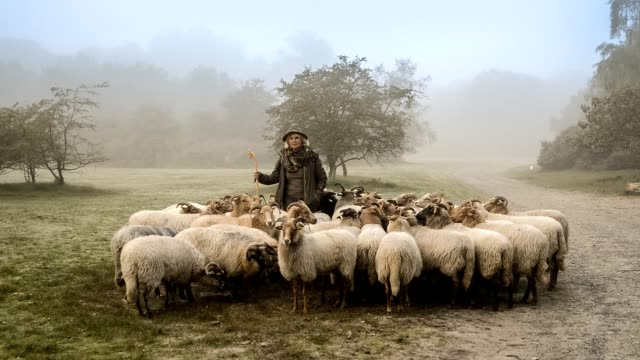 vídeos de stock e filmes b-roll de portrait of female shepherd and flock of sheep at a foggy sunrise in the woods - pastorear