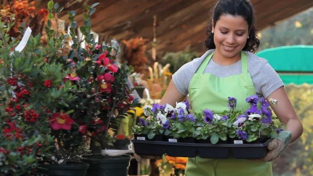 vidéos et rushes de ms pan portrait of female shop clerk carrying tray of pansies in plant nursery / richmond, virginia, usa - une seule femme d'âge moyen