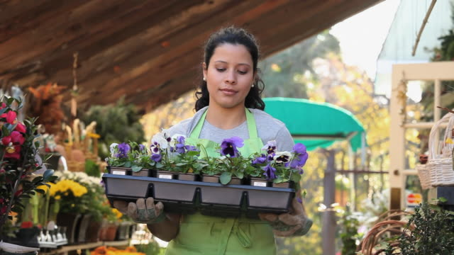MS PAN Portrait of female shop clerk carrying tray of Pansies in plant nursery / Richmond, Virginia, USA