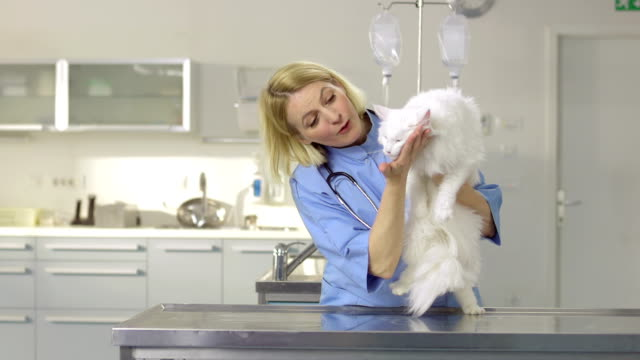 portrait of friendly vet with a cat - examination table stock videos & royalty-free footage