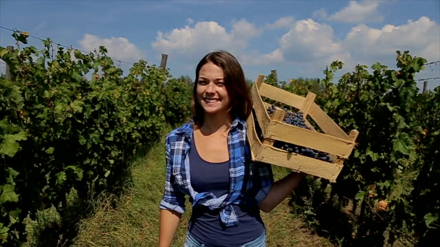 Portrait of gardener carrying crate with grape in vineyard