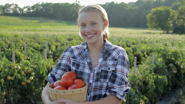 stockvideo's en b-roll-footage met ms portrait of girl (12-13) with fresh picked tomatoes / lebonan township, new jersey, usa - mand