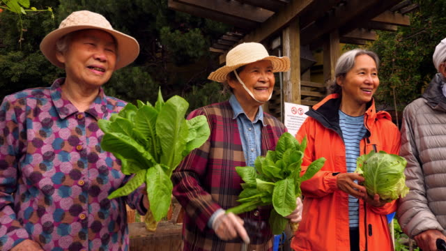 vídeos y material grabado en eventos de stock de ms portrait of group of smiling senior friends holding freshly cut greens while standing in community garden - 80 89 años