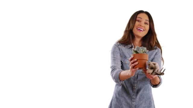portrait of hispanic woman holding out small plant in studio with copy space - gardening glove stock videos & royalty-free footage