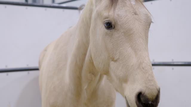 馬の肖像 - 雄馬点の映像素材/bロール