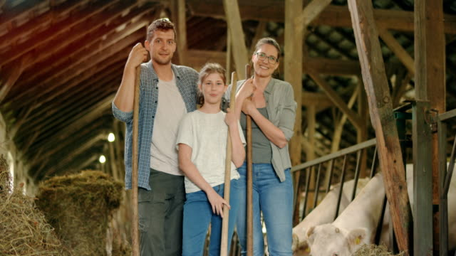 portrait of male and female farmer and their daughter in the barn holding pitchforks - domestic cattle stock videos & royalty-free footage