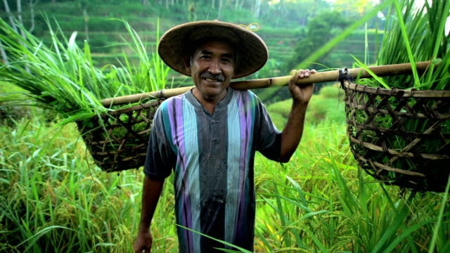 portrait of male indonesian worker carrying crops bali - east stock videos & royalty-free footage
