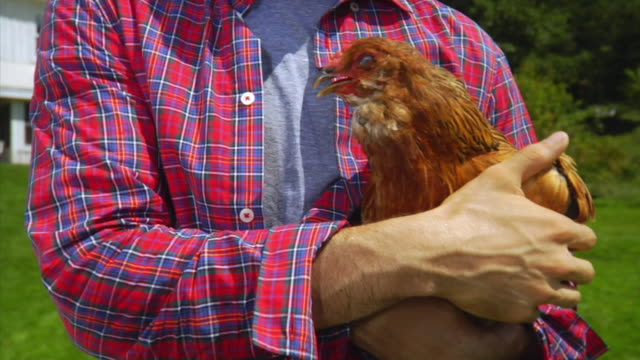 cu tu portrait of man holding chicken, bovina center, new york, usa - plaid shirt stock videos & royalty-free footage