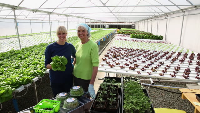 stockvideo's en b-roll-footage met ws ds portrait of mother and daughter small business owners in hydroponic lettuce farm greenhouse / richmond, virginia, united states - duurzaamheid