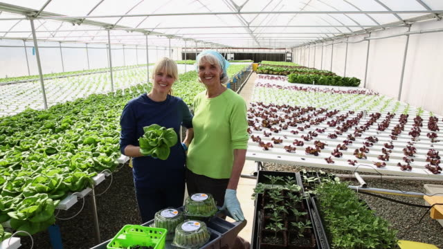 ws ds portrait of mother and daughter small business owners in hydroponic lettuce farm greenhouse / richmond, virginia, united states - owner stock videos and b-roll footage
