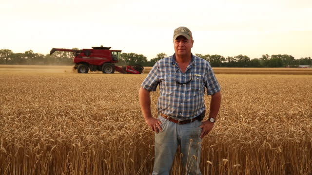 ms ds portrait of proud farmer in wheat field, large combine running in background / oyster, virginia, usa - farmer stock videos & royalty-free footage
