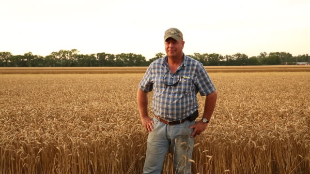 ms ds portrait of proud farmer in wheat field / oyster, virginia, usa - scena rurale video stock e b–roll