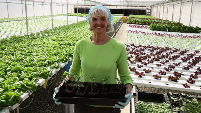 WS DS Portrait of Senior Small Business Owner in Hydroponic Lettuce Farm Greenhouse / Richmond, Virginia, United States