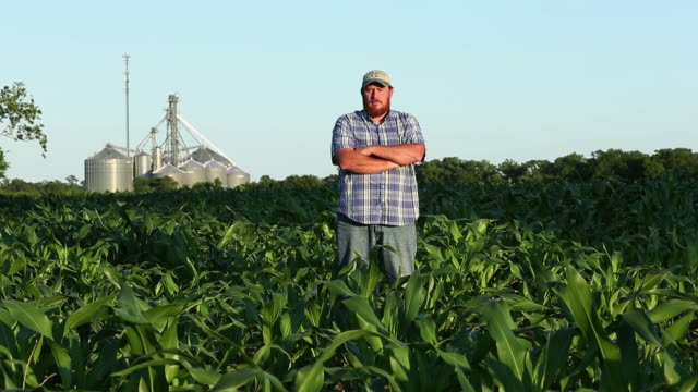 WS PAN Portrait of Serious Looking Farmer Standing in Cornfield / Eastville, Virginia, USA