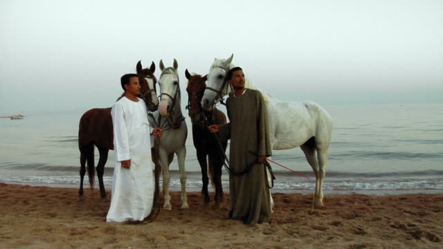 ws portrait of two men with horses on beach, dahab, sinai, egypt - four animals stock videos & royalty-free footage