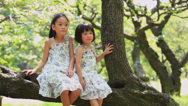 ms portrait of two sisters (4-5,8-9) sitting on tree branch / koganei, tokyo, japan - simple living stock videos & royalty-free footage