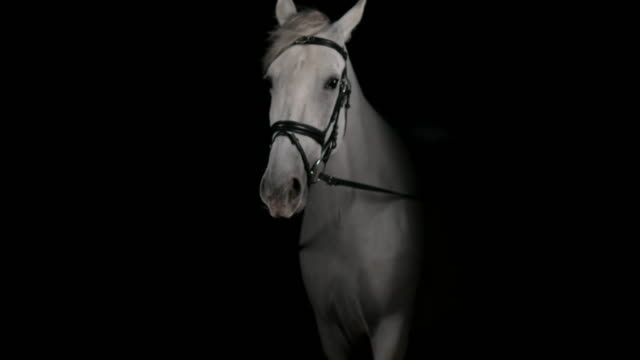 slo mo portrait of white horse stepping forward - trust stock videos & royalty-free footage
