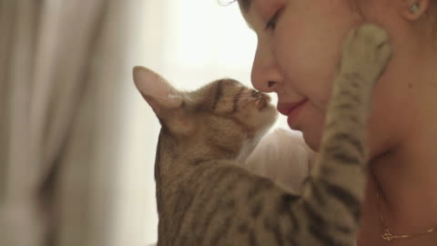 portrait of woman hugging and kissing her pet kitten. - part of a series stock videos & royalty-free footage