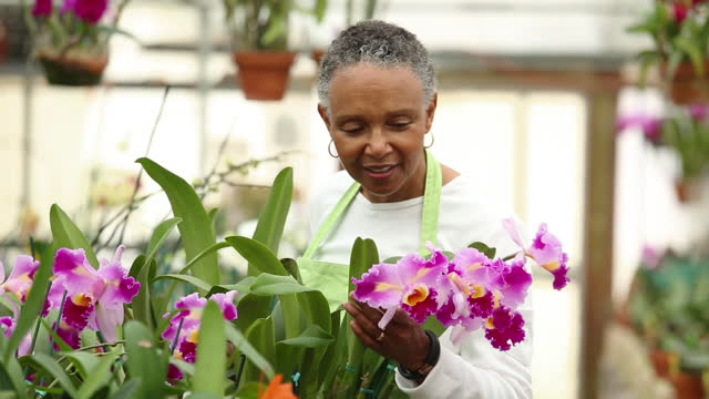 portrait of woman in greenhouse of orchids - hoop earring stock videos and b-roll footage