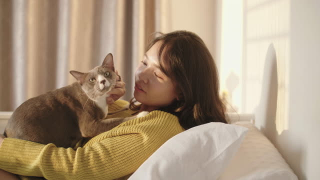 vídeos de stock, filmes e b-roll de retrato de mulher acariciando seu gato de estimação na cama branca no quarto. - pet clothing