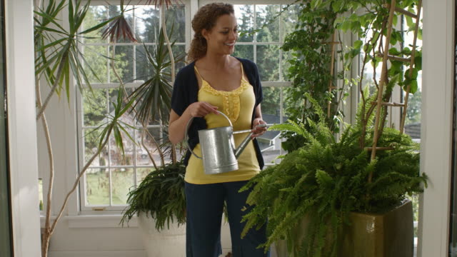 ms portrait of woman watering plants in garden room / edmonds, washington, usa - vattna bildbanksvideor och videomaterial från bakom kulisserna