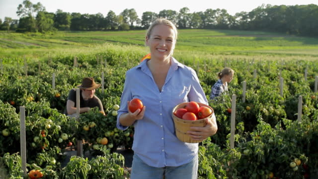 ws portrait of woman with fresh picked tomatoes, family working in background / lebonan township, new jersey, usa - produttore video stock e b–roll