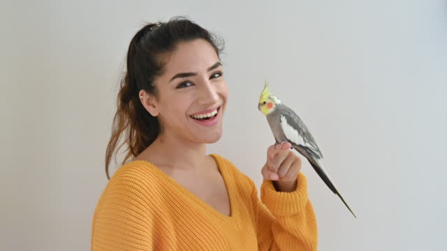 portrait of young indian woman and normal grey cockatiel - animal mouth stock videos & royalty-free footage