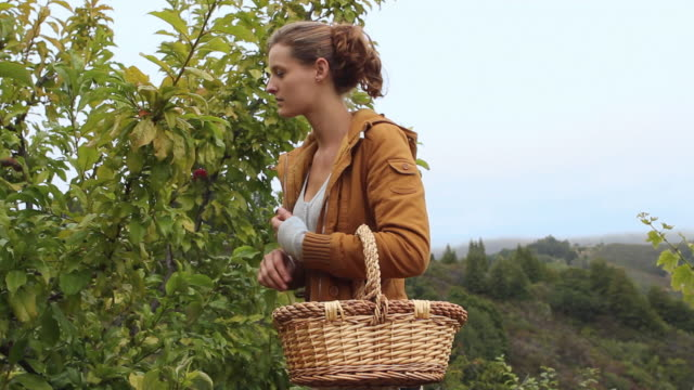 MS SLO MO Portrait of young woman picking plums in garden / Big Sur, California, USA