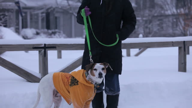 ms tu portrait of young woman with dog in snow / richmond, virginia, usa - coat garment stock videos & royalty-free footage