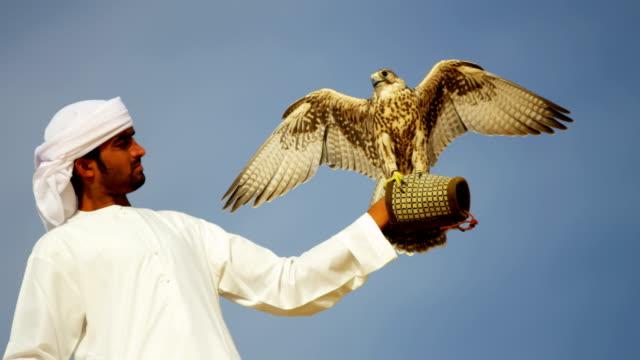 portrait peregrine falcon balanced arabic owners glove uae - falcon bird stock videos & royalty-free footage