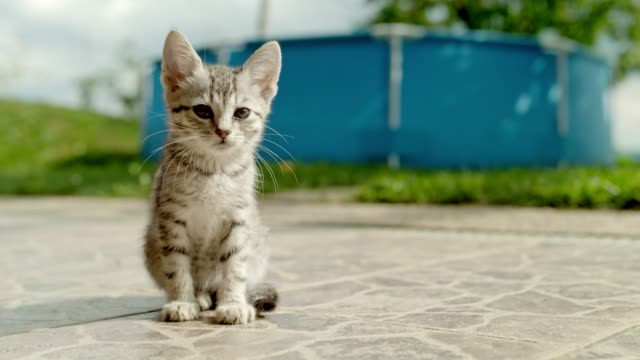 ms portrait striped kitten sitting on sunny patio - photography stock videos & royalty-free footage