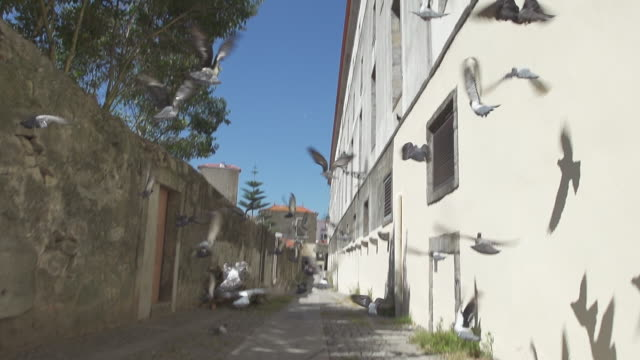 portugal porto - traditionally portuguese stock videos & royalty-free footage