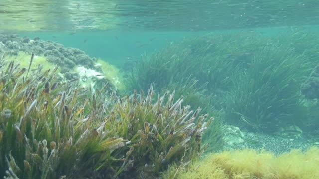 Posidonia で地中海