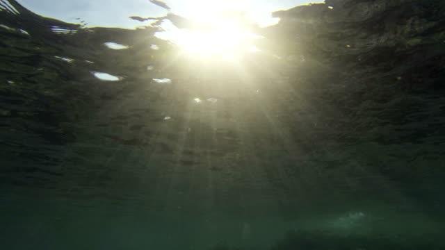 posidonia 移動には、水中波 - 無呼吸点の映像素材/bロール