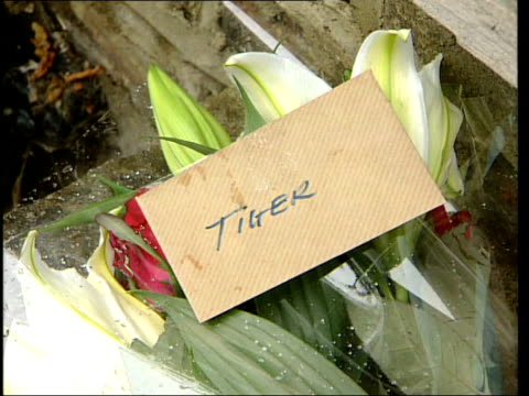 post mortem death inconclusive itn england london notting hill woman bringing bunch of flowers to lay outside home of paula yates pan cs card... - tiger lily stock videos & royalty-free footage