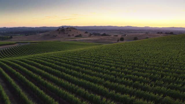 post sunset glow over california wine country - drone shot - ブドウ畑点の映像素材/bロール